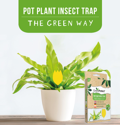 Green Protect Pot Plant Insect Trap EN Banner