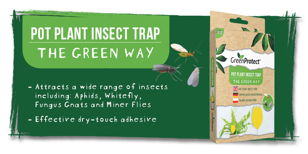 Green Protect Pot Plant Insect Trap EN